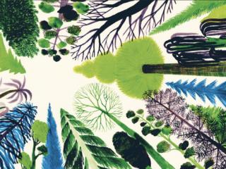 SIAMO FORESTA – suoni, passi, visioni – 30 luglio 2021